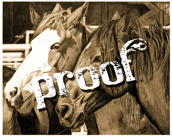 broncs for website